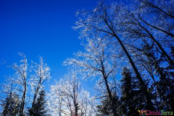 Québec - Cime de arbres gelée