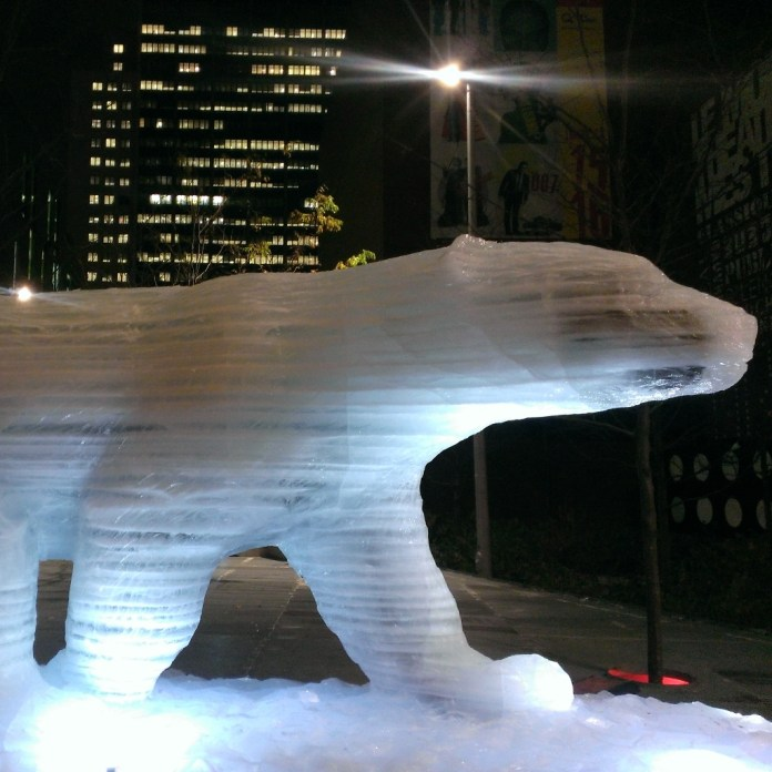 Montréal- Ours polaire sur glaces éphémères