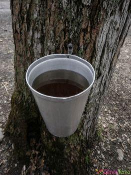 Québec-Cabane-à-sucre-Eau-dérable