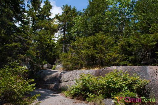 Adirondacks-Catamount