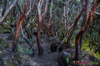 equateur-parc-el-cajas-arbre-a-papier