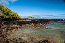 galapagos-isabela-mangroves-maree-basse