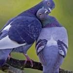 True love, found above