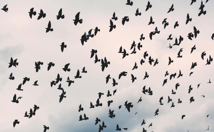 פודקאסט ילדי טבע – נדידת הציפורים (פרק שלישי)