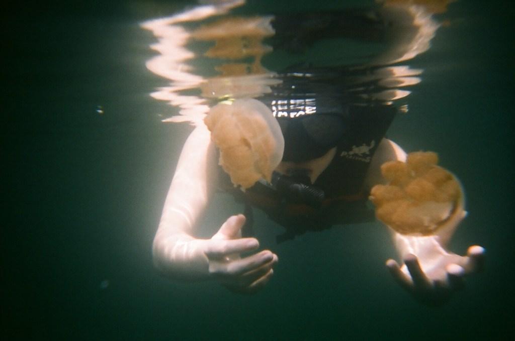 Jellyfish at Jellyfish Lake in Palau