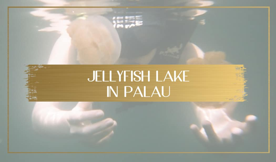 Jellyfish Lake in Palau main