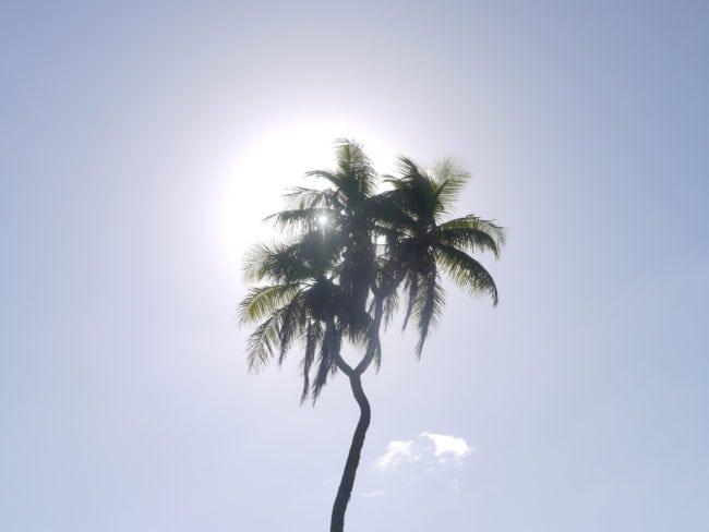 """""""Three-headed palm tree"""""""