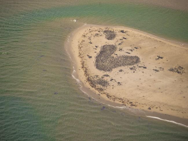 Birds on a sandbank