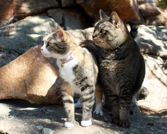 """""""Kitties'"""