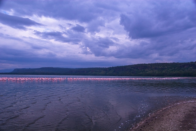 """Lake Nakuru flamingos"""