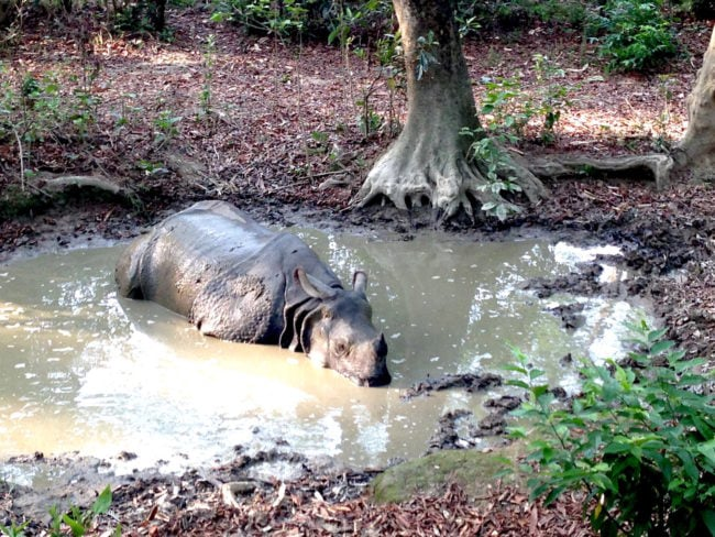 """Rhino in Chitwan"" safari in Asia"