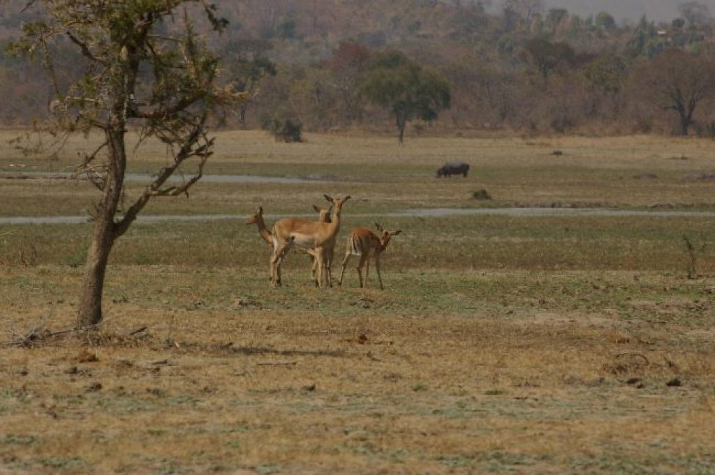 If you don't spot the Big 5, you'll definitely see a variety of wildlife in Malawi
