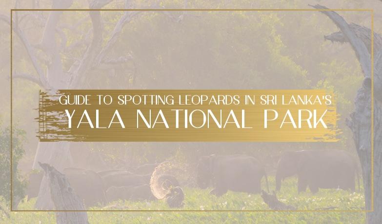 Yala National Park Main