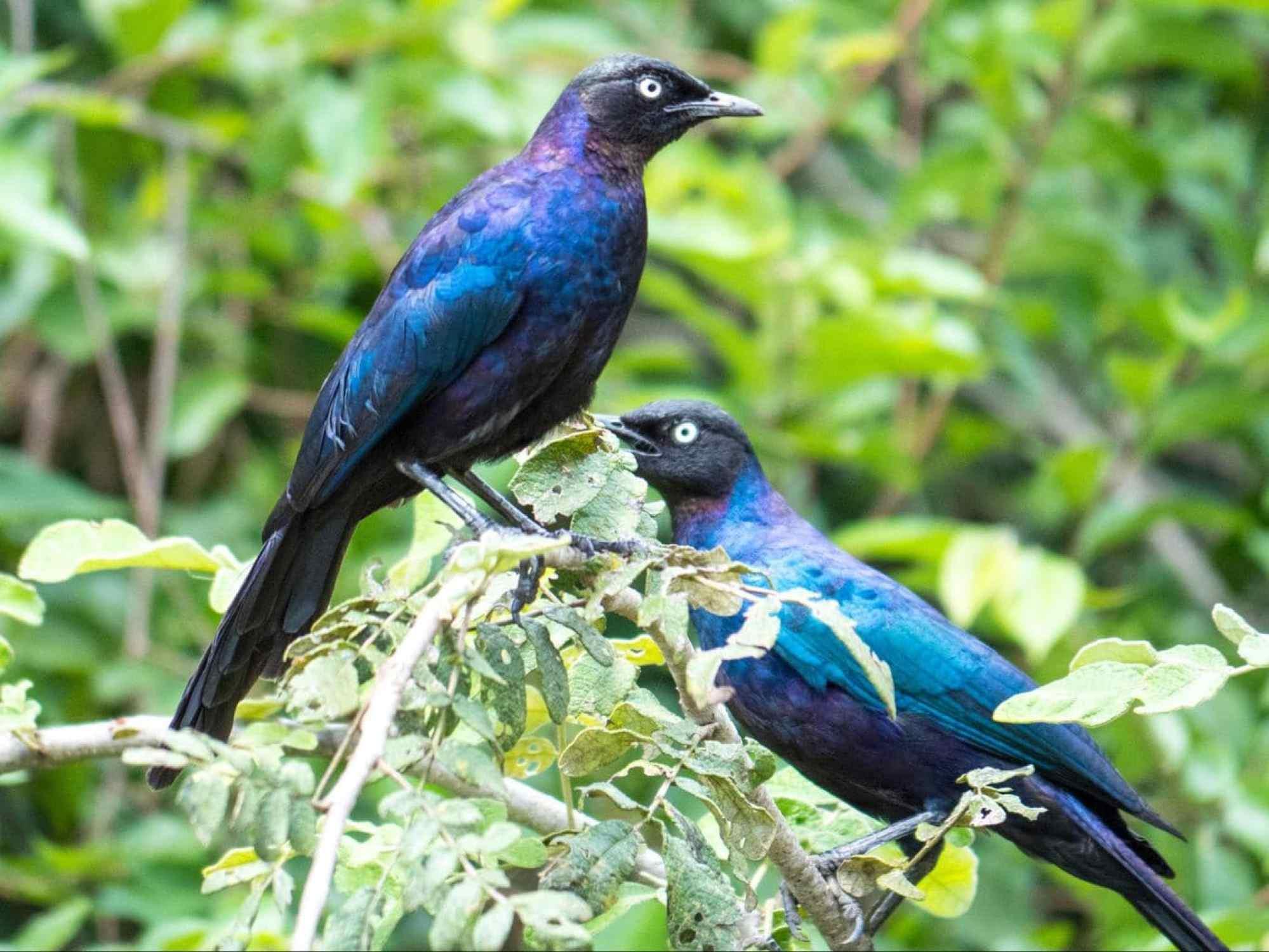 Birding in Akagera National Park