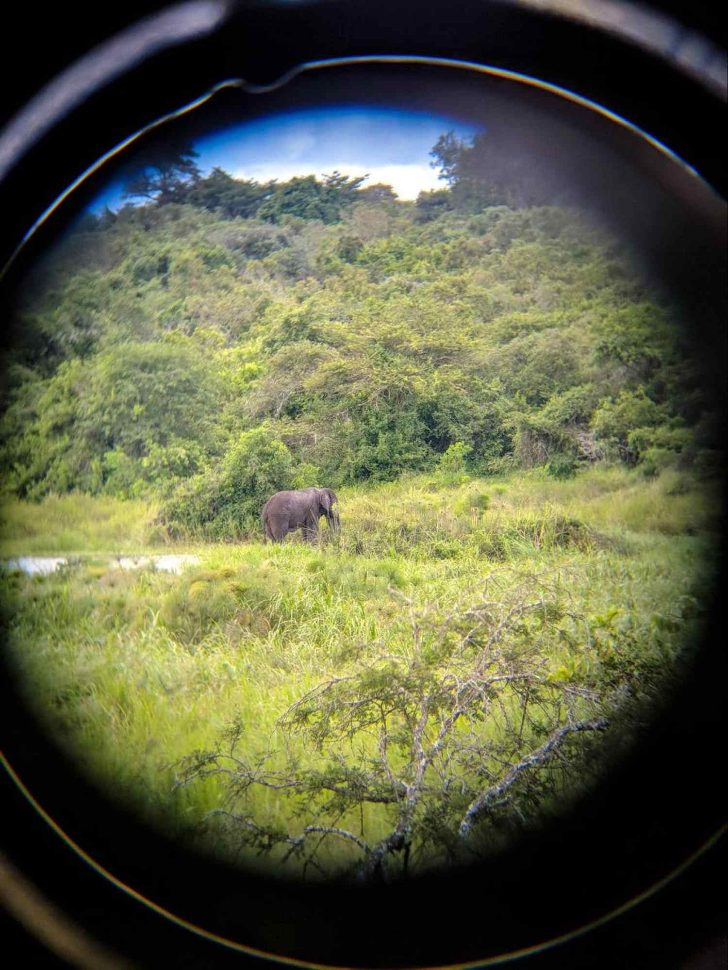 Hard to spot elephants through a binocular