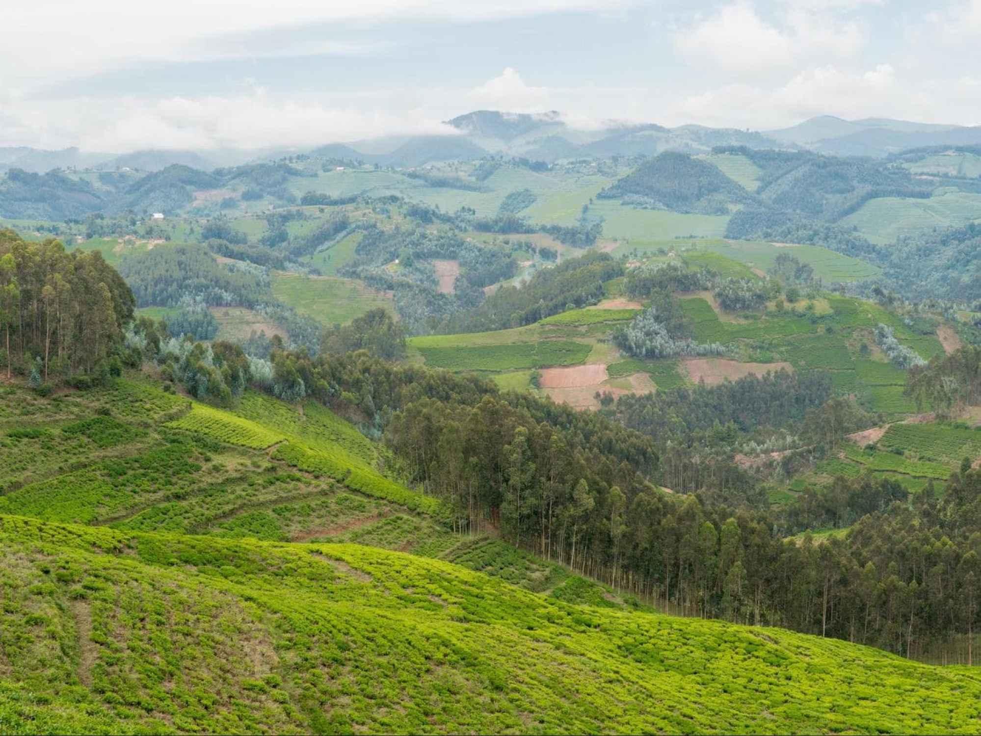 The landscapes near Gishwati Forest