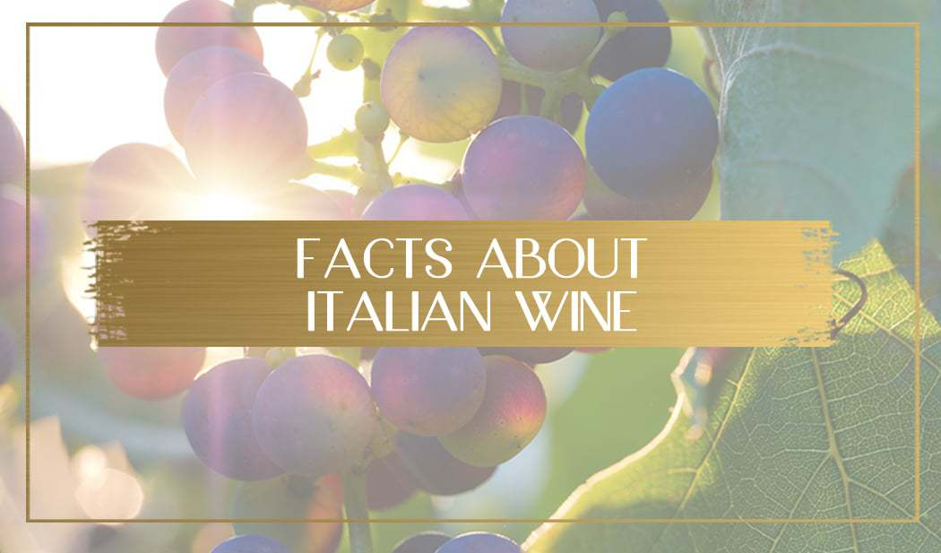 Facts About Italian Wine main