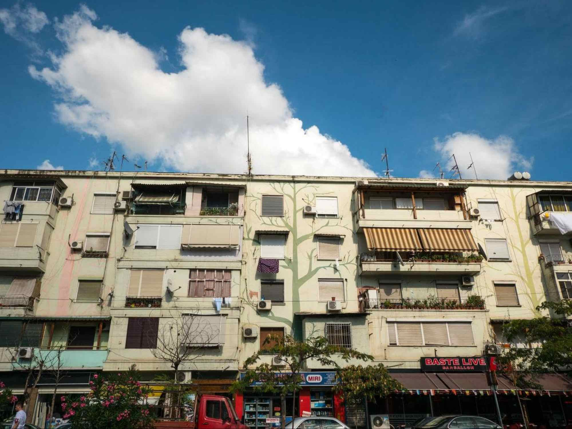 Tree murals on Tirana's buildings
