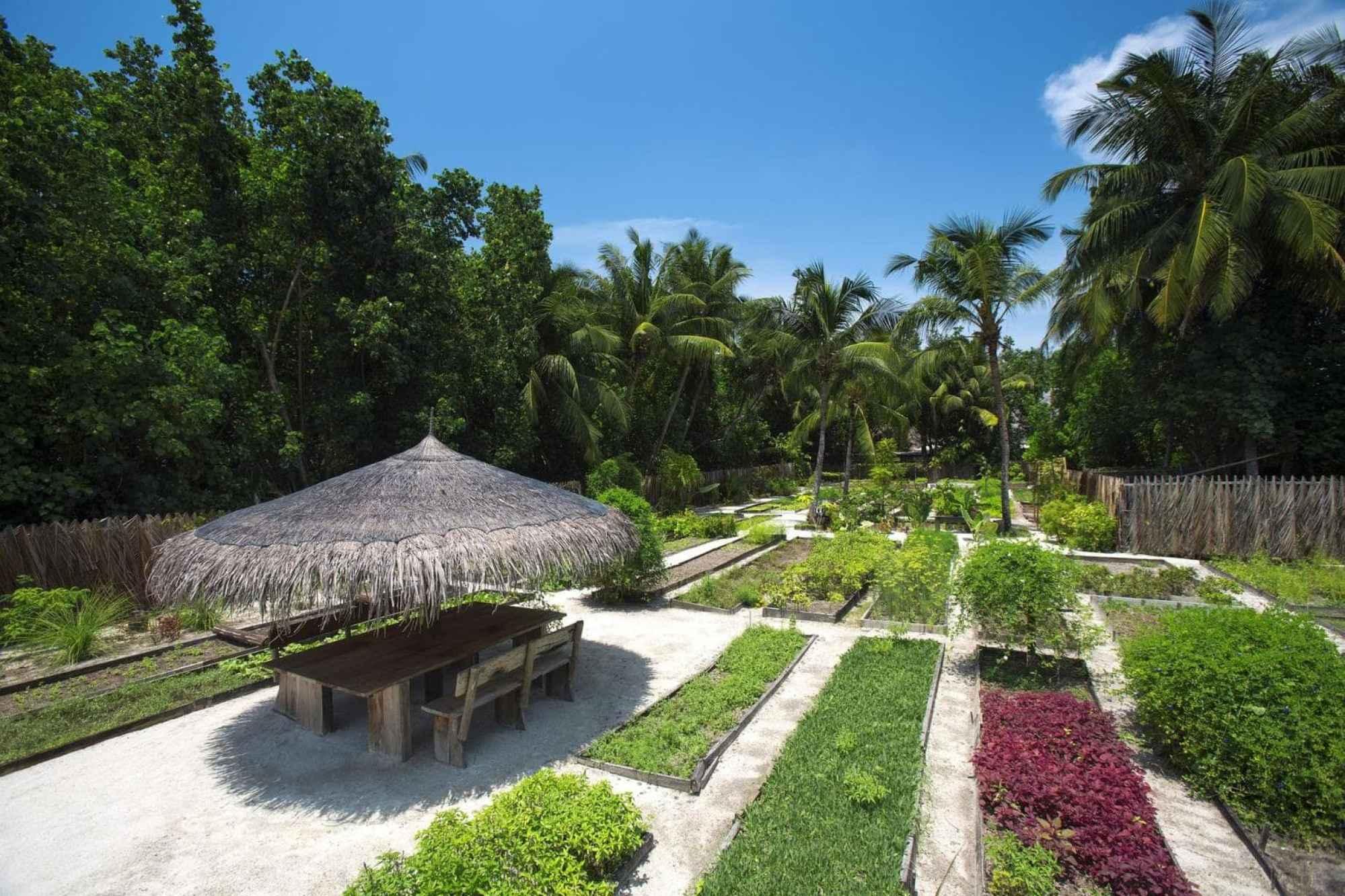 Organic garden at Gili Lankanfushi - Courtesy of Gili Lankanfushi