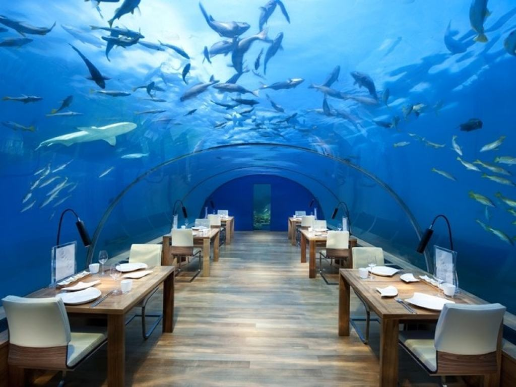 Dining with sharks overhead
