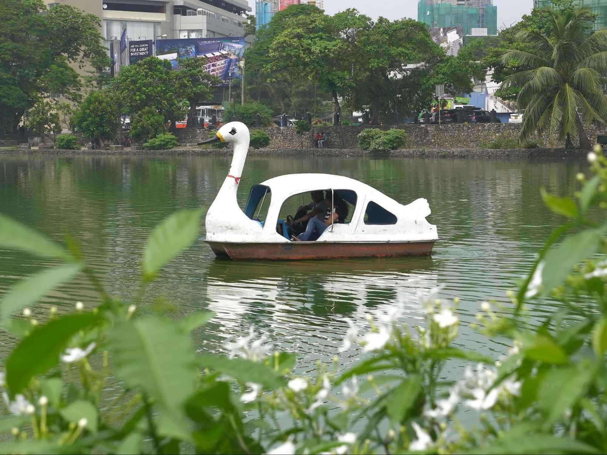 Swan pedal boats on Beira Lake