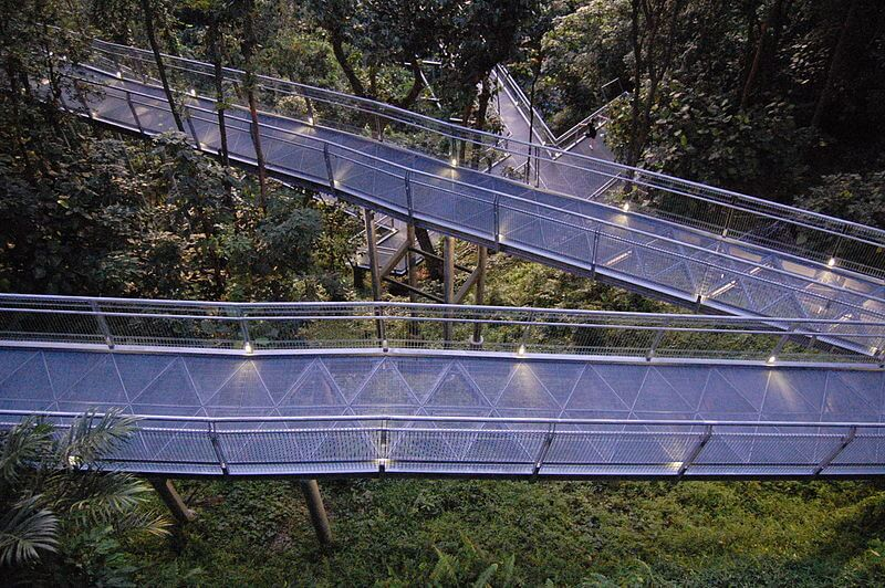 Elevated Walkway of the Forest Walk