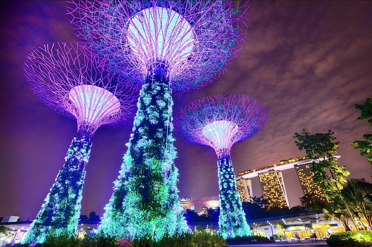 Supertrees lighting up at night for the Gardens by the Bay Light Show