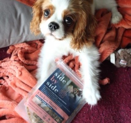 Once Upon a Pumpkin Puppy: Pumpkin's nutrition story with side by side pet food part II