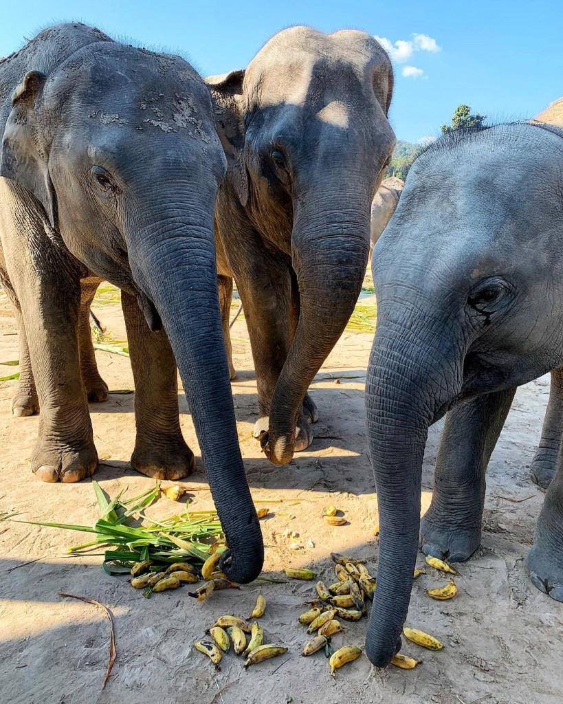 Elephant Sanctuary in Chiang Mai Thailand