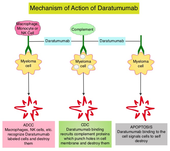 Daratumumab « New Drug Approvals Multiple Myeloma