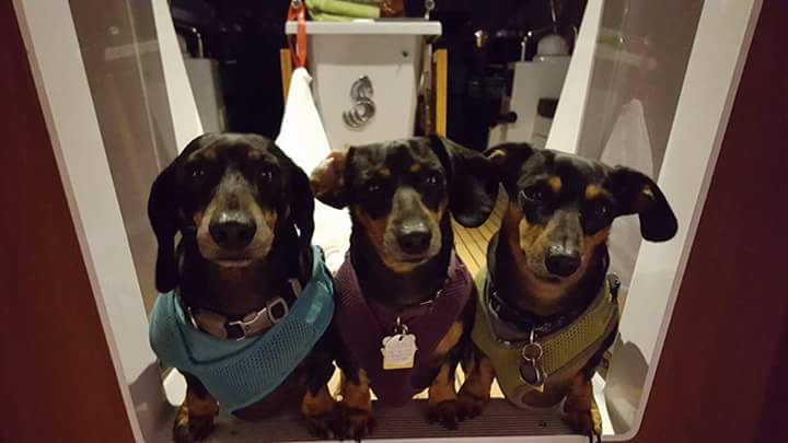 3Doxies