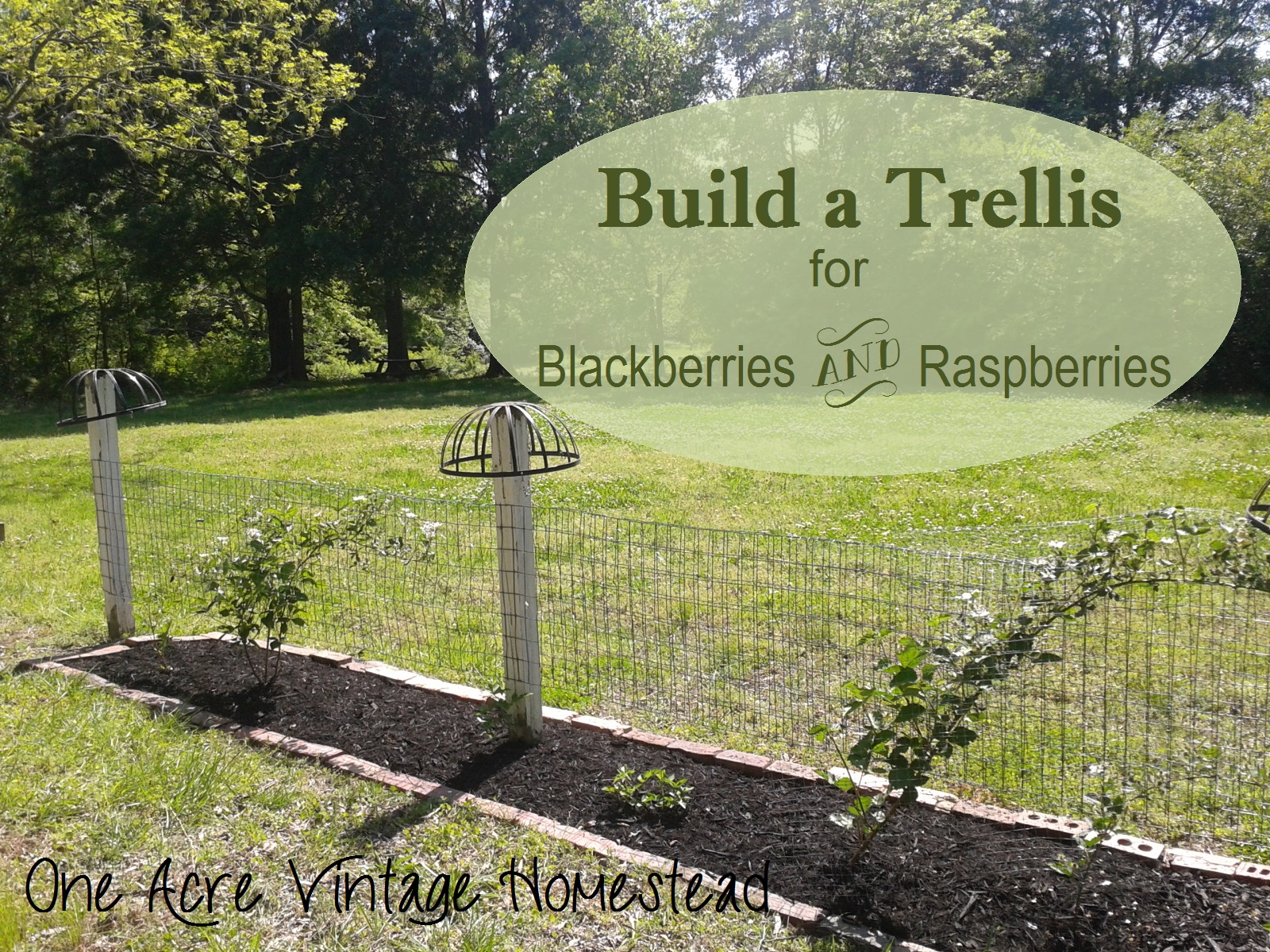 Blackberry Amp Raspberry Trellis ⋆ One Acre Vintage