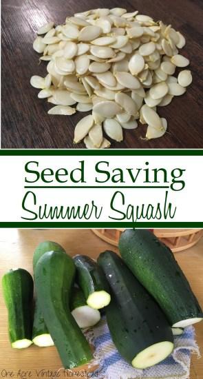 seed saving summer squash