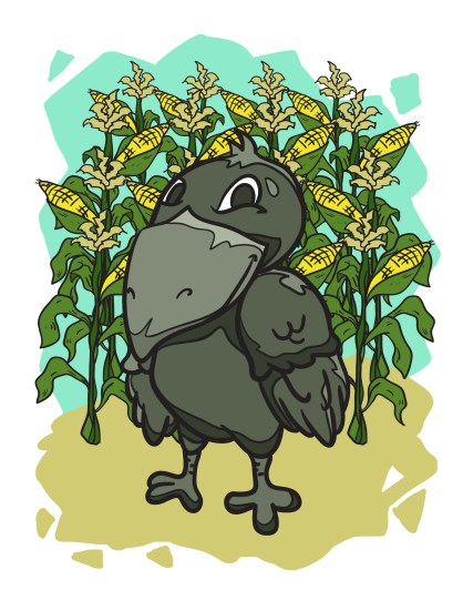 Crow grew the best corn in the county, and everybody in the area would line up to buy his sweet, crunchy, delicious corn.
