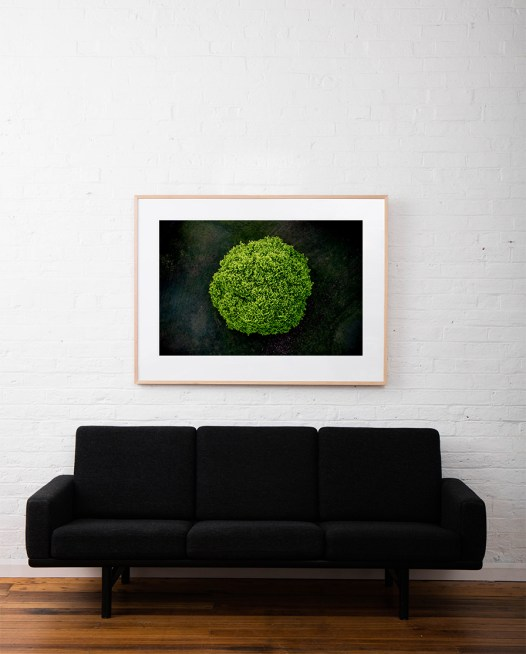 A large areial photographic print of the top of a green tree with dark background taken by Elizabeth Bull framed in raw timber on wall above sofa