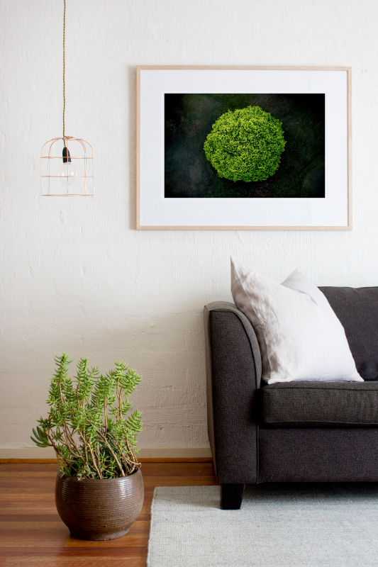 A areial photographic print of the top of a green tree with dark background taken by Elizabeth Bull framed in raw timber on wall in a home