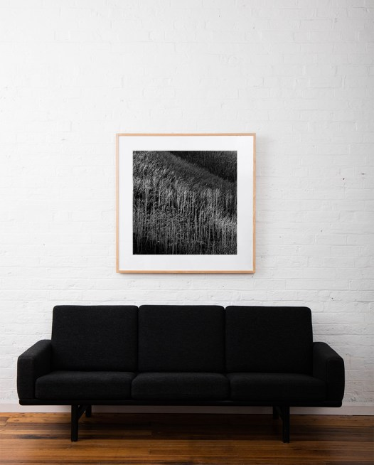 Square Black and white photographic art print of Ausrtalia landscape of trees by Paul Hoelen framed in raw timber on wall above sofa