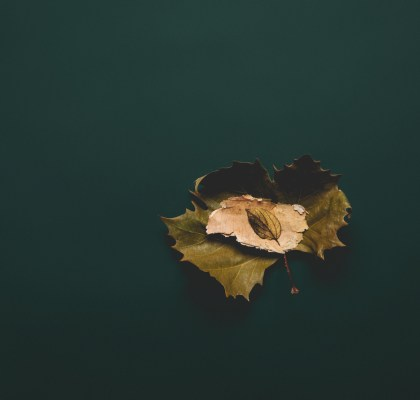 Photo of a Autumn leaf with green blackground
