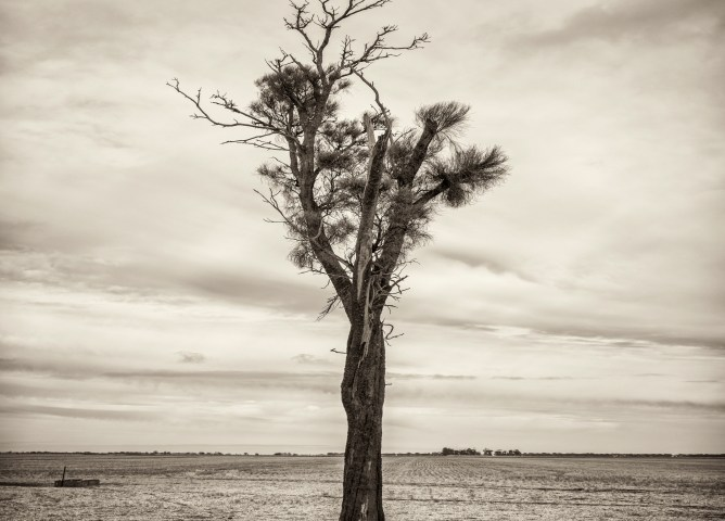 Black and white photo of Australian Landscape of fields and trees.