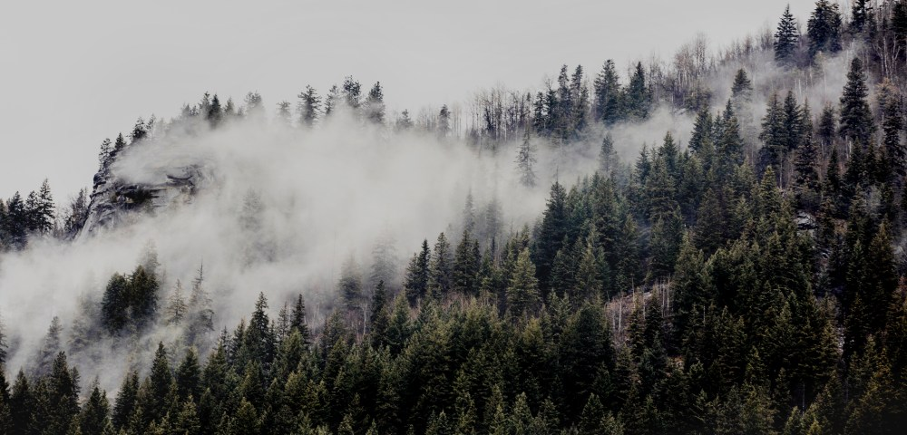 A photographic print of mist and fog over Mountains and trees in Canada