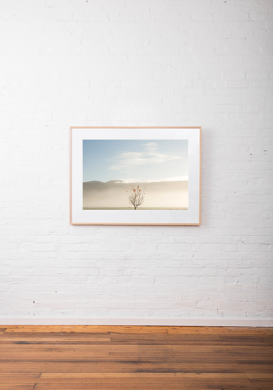 An abstract photo of Australian Landscape of one tree with clouds and sky background framed in raw timber on white wall