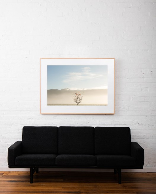 Large Print of The last of Autumn image in blue sky and clouds background by photographer Mark Lobo taken in Australia Landscape framed in raw timber frame on white wall above sofa