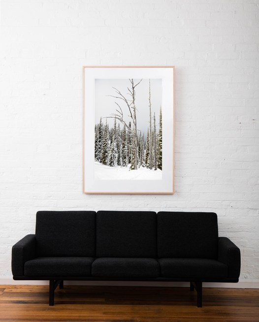 A large vertical Landscape photo taken in North America of snow and trees in shade of green , black and white framed in raw timber on white wall above sofa
