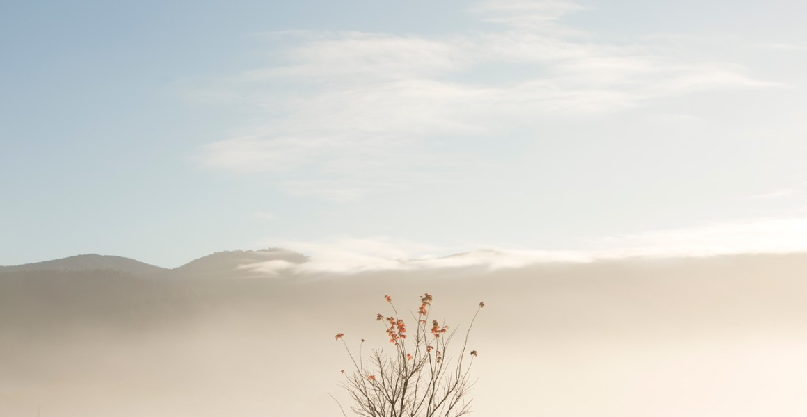 An abstract photo of Australian Landscape of one tree with clouds and sky background