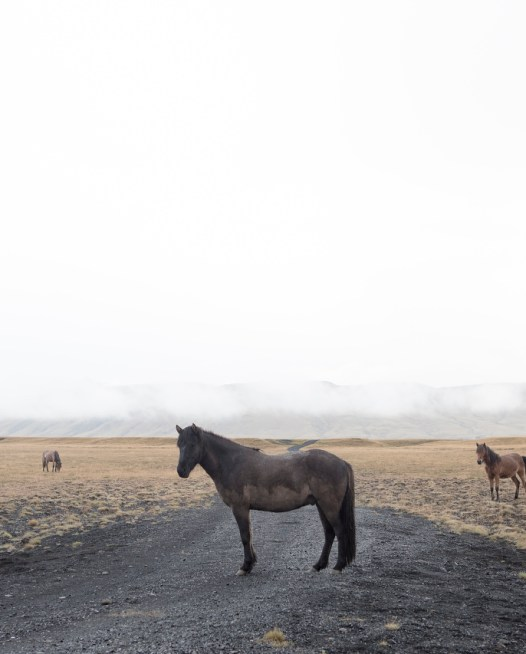A landscape photo with horses