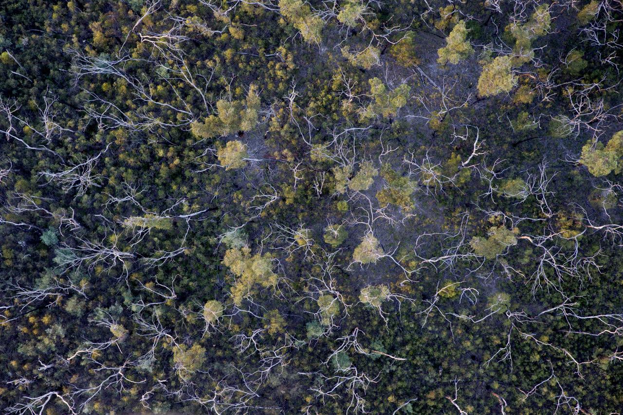 Aerial Art Print of Yarra Valley
