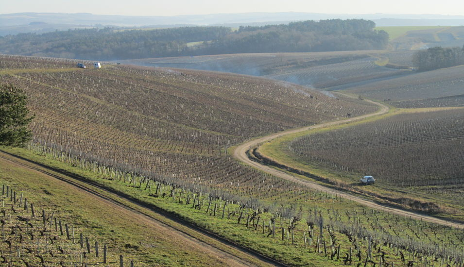 chablis wine feature view