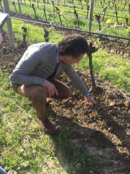 Jean-Claude Mas vineyard