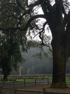 macmurray ranch grounds