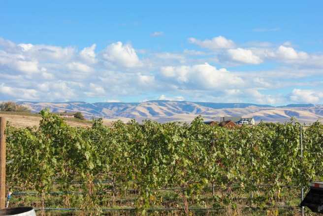The view from Sleight of Hand Cellars in Walla Walla